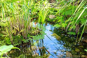 islander noosa pond